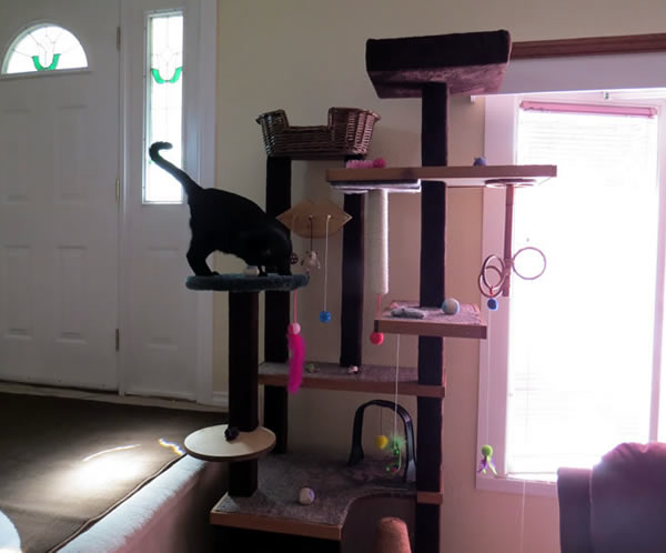 Diy cat tower yes we have happy cats and you can too for How to make a cat tower