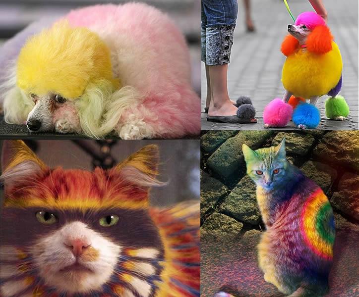 Pet Dye