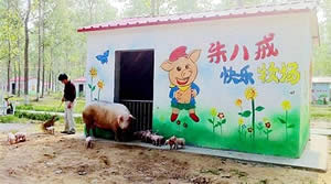Pig Villa In China