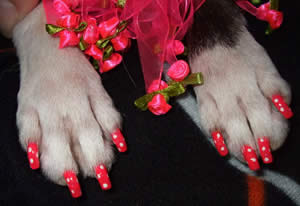 Dog Nail Polish