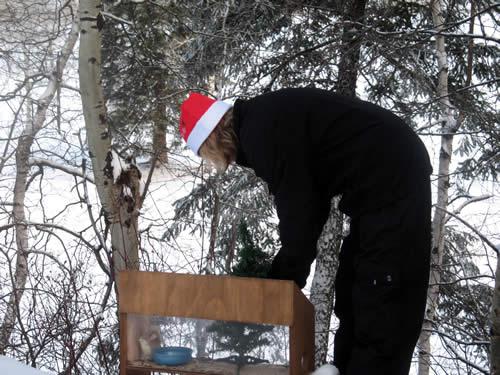 Critter Christmas