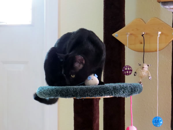 Round Sitting Perch For Cat On Cat Tree
