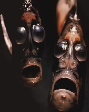 Strange ocean creatures