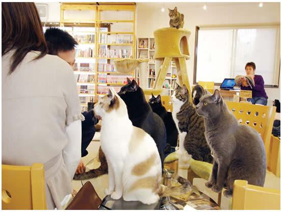 Cat Cafe Nekorobi