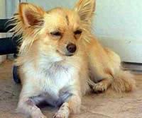 Zoey - Hero Dog