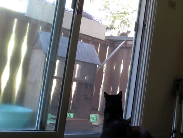 wills thoughts about cats watching a squirrel