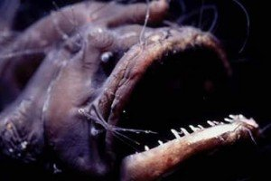 Anglerfish Have A Parasite That Won't Get Off Its Back