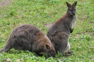 Tasmanian Crop Circle Creators Are Finally Exposed