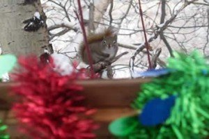 Will's Thoughts | Crazy Lady's First Critter Christmas [PICTURES]