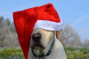 Christmas Rules For Canine Conduct
