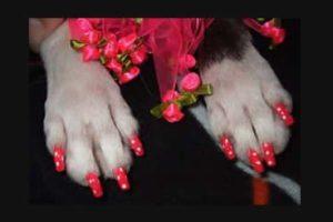 Nail Polish For Pampered Pets