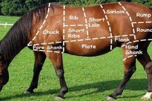 True or False? U.S. Legalized Horse Meat For Human Consumption