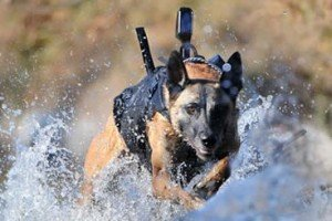 Dog That Took Osama Bin Laden Down | Cario
