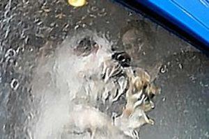 Dog-O-Matic Washing Machine | Stupid Pet Idea