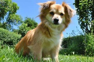 10 Commandments For Pet Ownership   By Stan Rawlinson