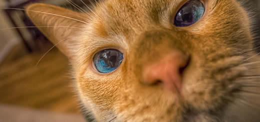 Narcotic Detecting Cat
