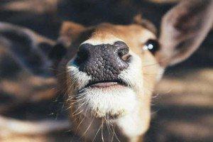 Voice Modulators And Deer | By Steven Wilson