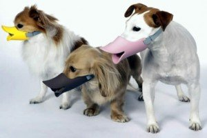 Dog Muzzles That Owners Will Go Quackers For
