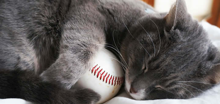 Cat to throw baseball