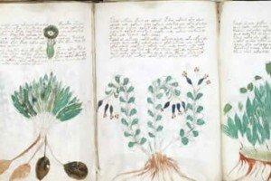 The Key To Decoding The Voynich Manuscript