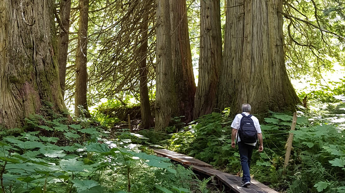 ancient-forest-prince-george-british-columbia-001