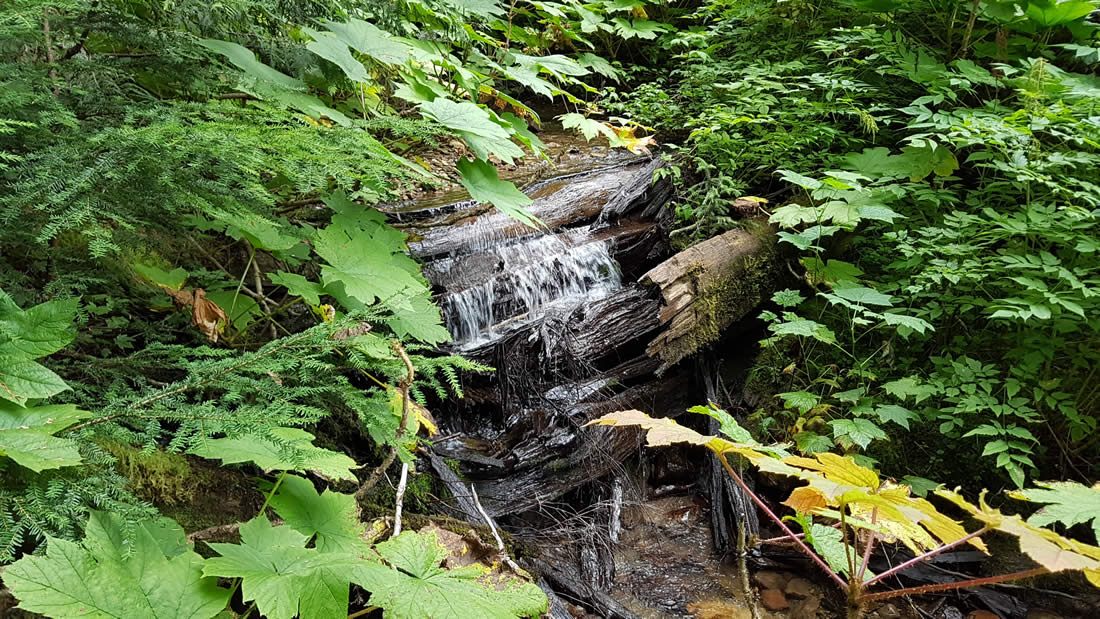 ancient-forest-prince-george-british-columbia-003