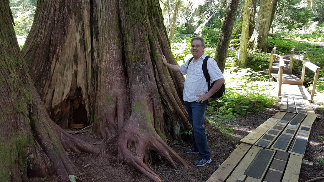 ancient-forest-prince-george-british-columbia-007