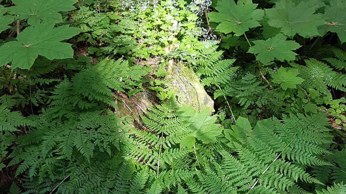 ancient-forest-prince-george-british-columbia-008