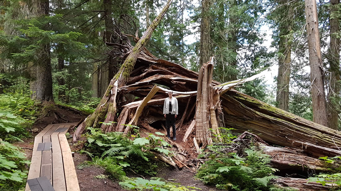 ancient-forest-prince-george-british-columbia-009