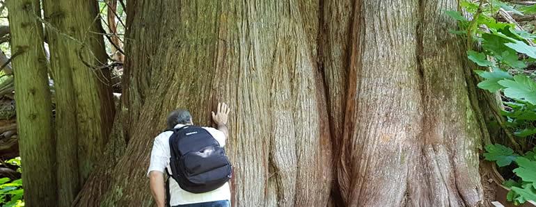 Ancient Forest British Columbia Canada