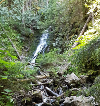 Ancient Forest Prince George Waterfall