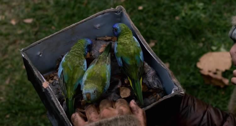 Bird Box Movie Review 3 Birds