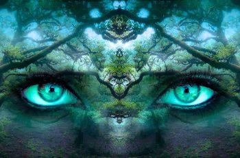 Spirituality Dreams Eyes In Forrest